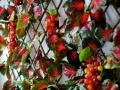 toskana-08-jpg