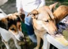 Экскурсии с собаками-терапевтами